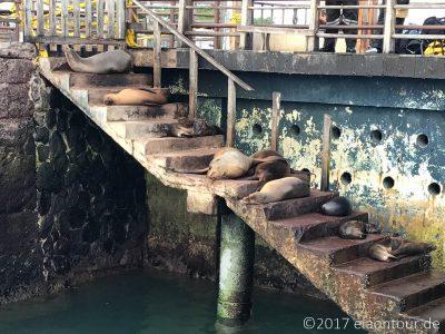 San Cristóbal – Die Insel der Seelöwen
